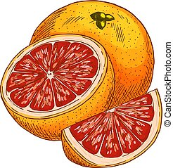 Red orange fruit vector sketch isolated icon - Red orange...