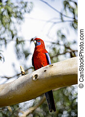Red parot on the tree2