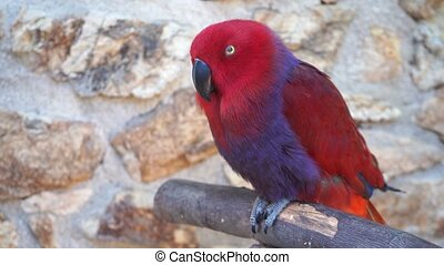 red parrot on the background of stones