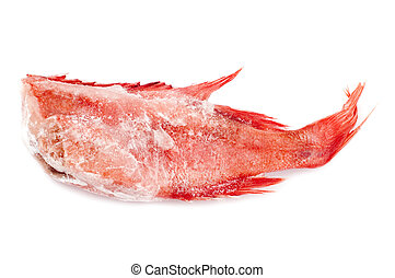 Red perch - object on white - raw food Red perch