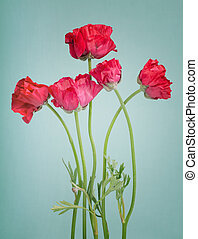 Red persian buttercup bouquet on a vintage light blue background