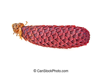 Red pine cone on a white background