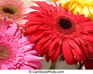 Red, pink, yellow gerbera flower bouquet