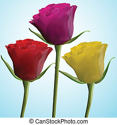 red pink yellow roses