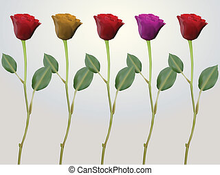 red pink yellow stem roses