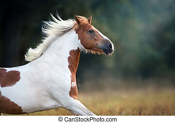 Red pinto horse in fog