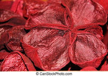 red  plant seed dried