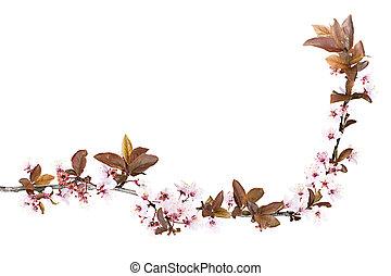 plum tree blossom