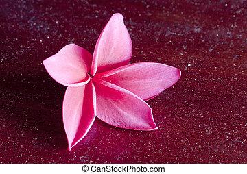 low key lighting of red frangipani