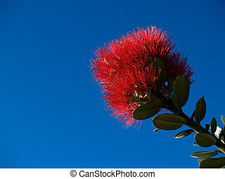 Bright red pohutukawa flower agains clear blue sky.