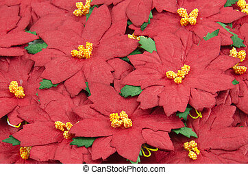 Red Poinsettia. Christmas Flower background