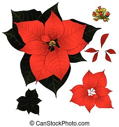 Red Poinsettia isolated on White Background. Vector Illustration