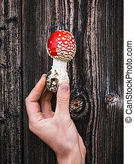 Red poisonous mushroom mushroom - Red poisonous mushroom...