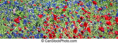 Red Poppies and Bluebonnets