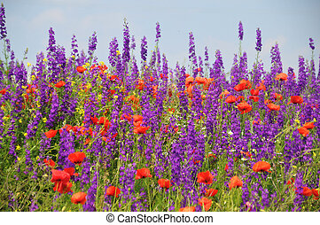 Red poppies and spring flowers in the meadow