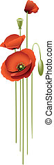 red poppies - Each flower on a separate layer, easy to edit