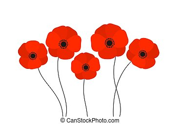 Red poppies flowers isolated on white background.