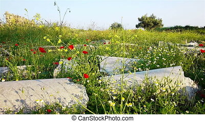 Red poppies flowers near ancient ruins in Side, Turkey