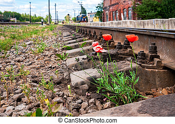 Red poppies growing next to the railroad