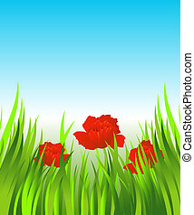 Red poppies in the grass