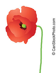 red-poppy - Vector illustration of beautiful red poppy over...