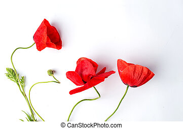 Poppy flower on white background top view