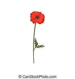 Red poppy flower with stem, floral design element vector Illustration on a white background