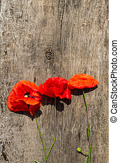 Red poppy flowers on wooden background