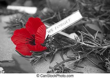 Red poppy on Anzac Day - bright red poppy on Anzac Day with...