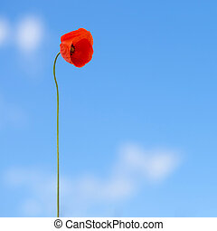 Red poppy on blue sky background