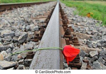 Red poppy on railways