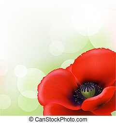 Red Poppy, Vector Illustration
