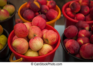 Red ripe apples in bucket.