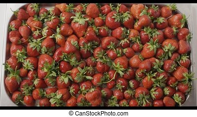 Red ripe juicy strawberry slow falls one by one on a tray...