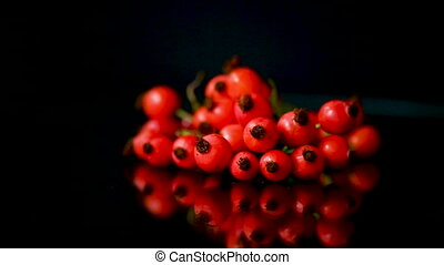 red ripe rosehip berries on a black background