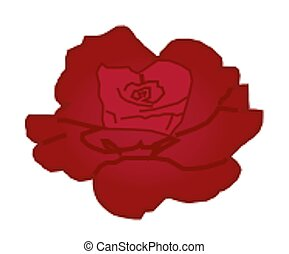 Red Rose - A solitary red rose on a white background.