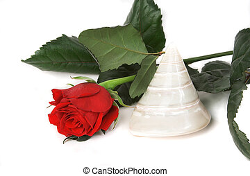 Red rose and a sea shell