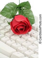 red rose and keyboard