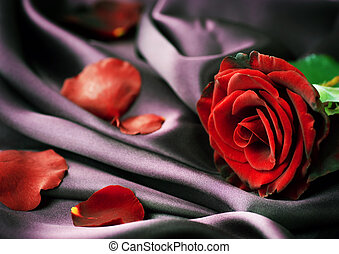 Red Rose And Silk