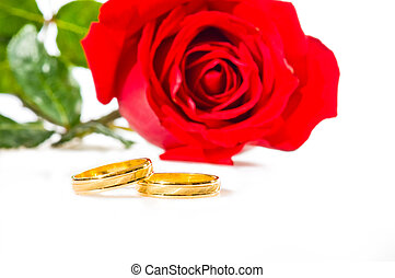 Red rose and wedding rings over white