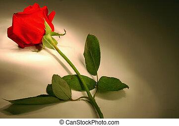 Rose - Red Rose at Night
