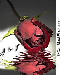 Red rose beyond water