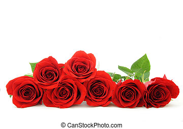 Red rose border - Beautiful red roses arranged as a ...