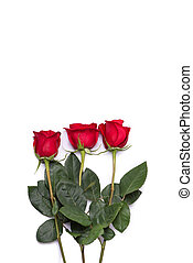 red rose bouquet flower isolated on white clipping path included
