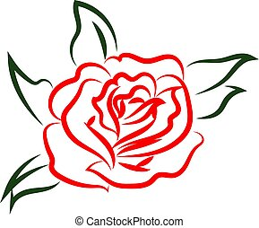 Red rose drawing, illustration, vector on white background.