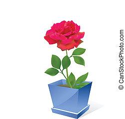 red rose flower in pot om white background