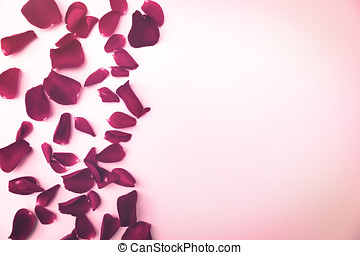 red rose flower petals with copy space on white background
