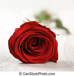 Red rose for holiday on the vintage wooden background