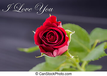 i love you image with single red rose