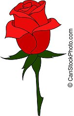 Red rose, illustration, vector on white background.